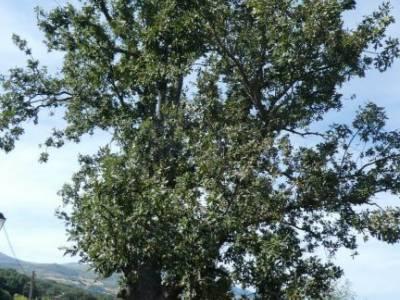Sierra de Gredos; Barco Ávila; senderismo madrid singles nacimiento rio manzanares grupos de senderi